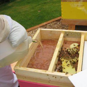 ? عسل تغذیه ای چیست؟