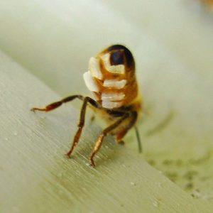 ? موم زنبور عسل - کاربردها و خواص درمانی آن