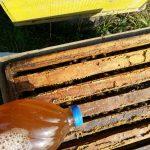 داروی ضد کنه زنبور عسل (واروا) مارول