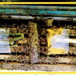کیک گرده زنبورعسل پروبی تقویت زنبورعسل و افزایش تخم ریزی زنبور