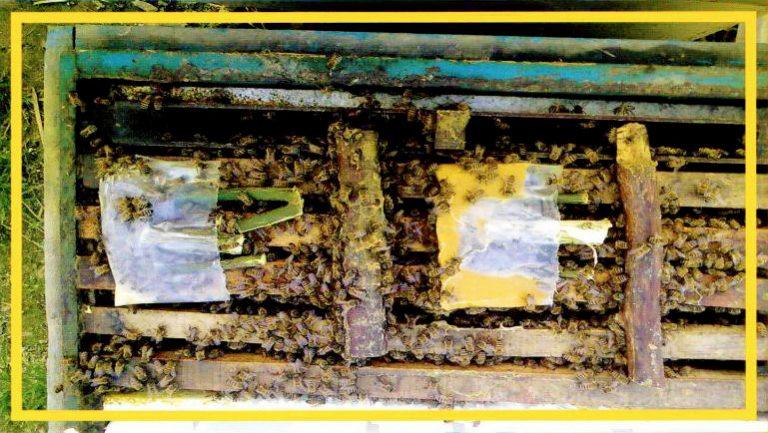کیک گرده زنبورعسل ( پروبی )