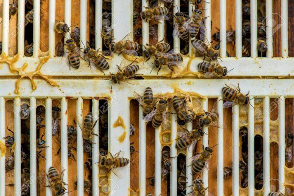 شبکه مانع ملکه میله ای پلاستیکی زنبور عسل آذرپلاستیک