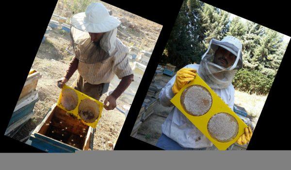 قاب دایره ای پلاستیکی زنبورداری، شان گرد آذرپلاستیک