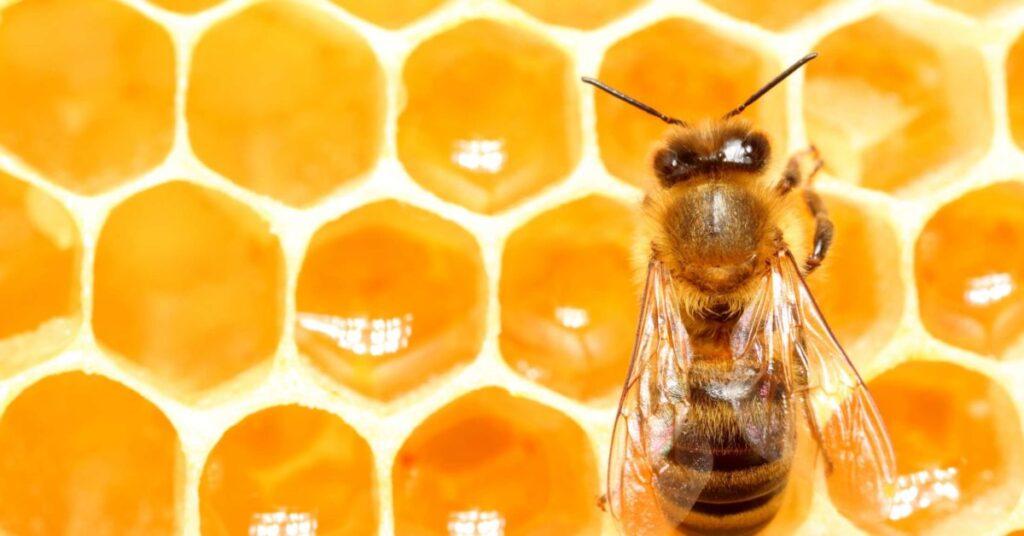 نقش عسل در پزشکی مدرن- درمان با عسل