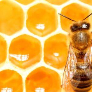 نقش عسل در پزشکی مدرن