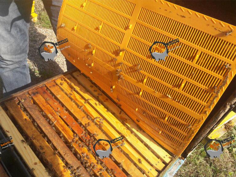 تله بره موم پلاستیکی زنبور عسل